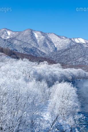 北海道冬の風景 富良野の樹氷の写真素材 [FYI04103645]