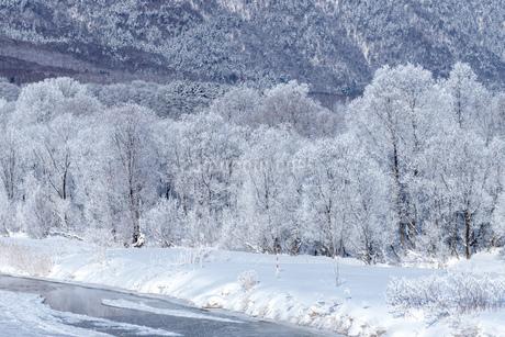 北海道の冬の風景 富良野の樹氷の写真素材 [FYI04103647]
