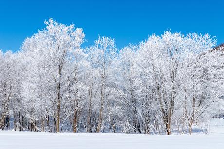 北海道冬の風景 富良野の樹氷の写真素材 [FYI04103650]