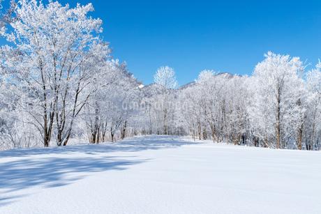 北海道冬の風景 富良野の樹氷の写真素材 [FYI04103651]