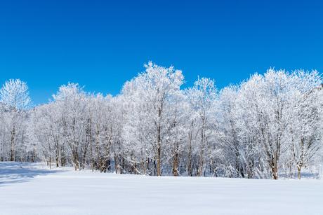 北海道の冬の風景 富良野の樹氷の写真素材 [FYI04103653]
