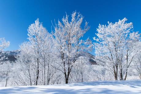 北海道冬の風景 富良野の樹氷の写真素材 [FYI04103655]