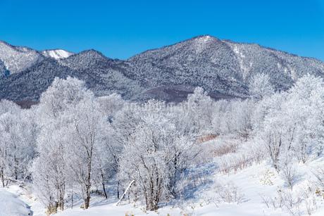 北海道冬の風景 富良野の樹氷の写真素材 [FYI04103656]