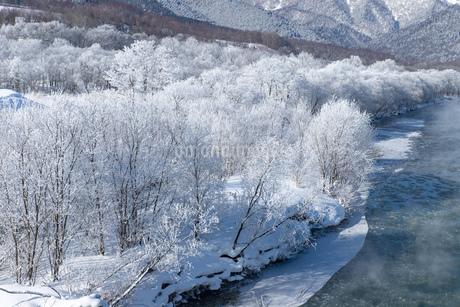 北海道冬の風景 富良野の樹氷の写真素材 [FYI04103658]