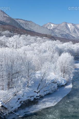 北海道冬の風景 富良野の樹氷の写真素材 [FYI04103659]