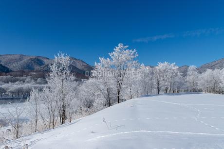 北海道冬の風景 富良野の樹氷の写真素材 [FYI04103667]