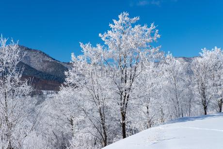 北海道冬の風景 富良野の樹氷の写真素材 [FYI04103668]