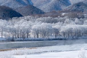 北海道冬の風景 富良野の樹氷の写真素材 [FYI04103669]