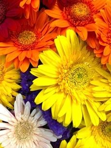 カラフルな花の写真素材 [FYI04103722]