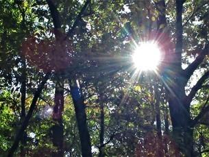輝く秋の緑の世界の写真素材 [FYI04103729]