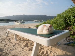 石垣島の猫の写真素材 [FYI04103768]
