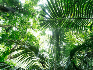 石垣島のジャングルの写真素材 [FYI04103773]