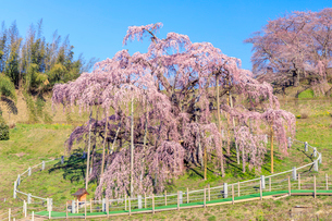 滝桜の写真素材 [FYI04104206]