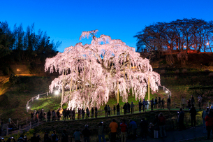 滝桜の写真素材 [FYI04104233]