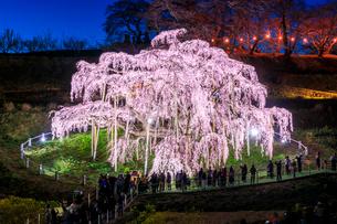 滝桜の写真素材 [FYI04104269]