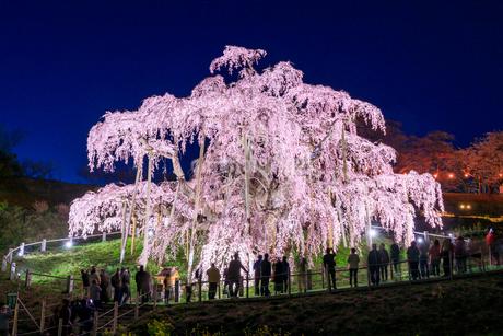 滝桜の写真素材 [FYI04104270]