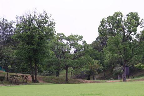 公園の写真素材 [FYI04104339]