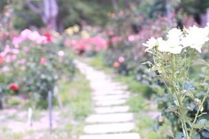 奥に続く花道の写真素材 [FYI04104381]