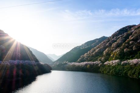 桜の写真素材 [FYI04104675]