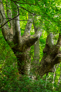 けやきの森の写真素材 [FYI04104737]