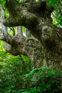けやきの森の写真素材 [FYI04104738]