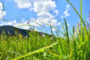 高原の草原の写真素材 [FYI04104767]