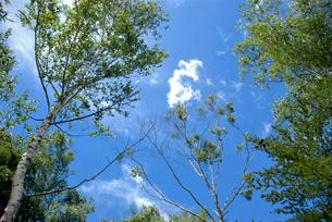 高原の青空の写真素材 [FYI04104768]