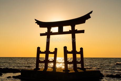 金比羅神社の写真素材 [FYI04104946]
