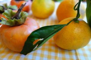 オレンジのギンガムチェックの布の上の柿と蜜柑の写真素材 [FYI04105091]