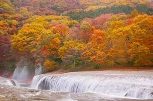 紅葉に染まる吹割の滝の写真素材 [FYI04105154]