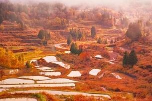 星峠の棚田秋景色の写真素材 [FYI04105178]