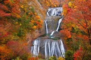 秋色に染まる袋田の滝の写真素材 [FYI04105191]