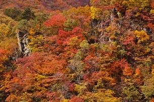 秋色に染まる森の写真素材 [FYI04105215]