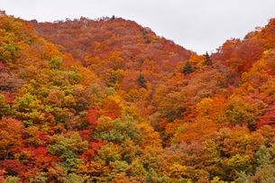 秋色に染まる森の写真素材 [FYI04105219]