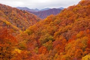 秋色に染まる森の写真素材 [FYI04105221]