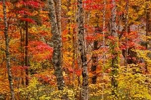秋色に染まる森の写真素材 [FYI04105226]