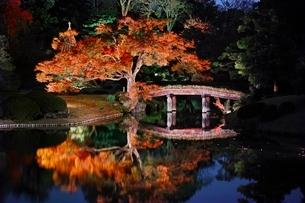 六義園 秋のライトアップの写真素材 [FYI04105244]