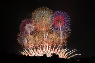 利根川大花火大会 フィナーレミュージックスターマイン THE SAKAI HANABIの写真素材 [FYI04105459]