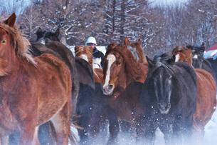 十勝牧場の馬追い運動の写真素材 [FYI04105475]