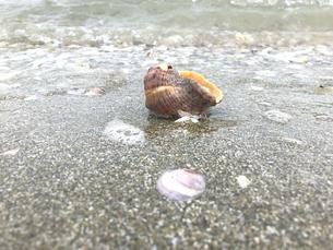 打ち寄せる波で転がる貝殻の写真素材 [FYI04105759]