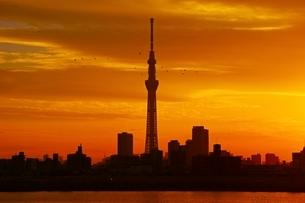 荒川より望む東京スカイツリー夕景の写真素材 [FYI04105973]