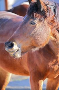 キュートな馬の写真素材 [FYI04106020]