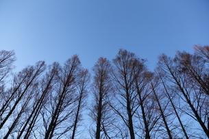 夜を待つ木々の写真素材 [FYI04106047]