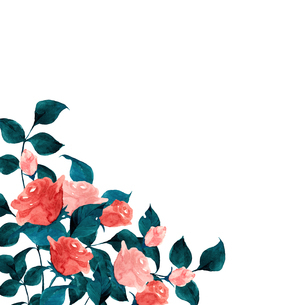 薔薇の水彩画のイラスト素材 [FYI04106070]