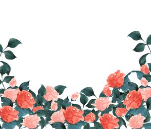 薔薇の水彩画のイラスト素材 [FYI04106073]
