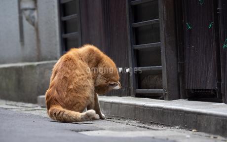 町の裏路地にいる茶色の野良猫の写真素材 [FYI04106352]