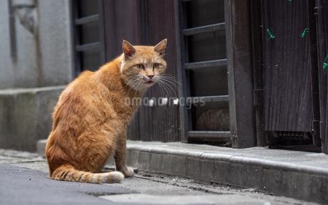 町の裏路地にいる茶色の野良猫の写真素材 [FYI04106353]