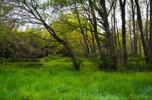 新緑の林の写真素材 [FYI04106389]
