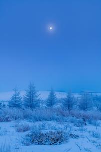 孤高の月の写真素材 [FYI04106431]