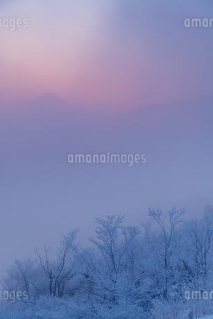 ほのかに染まる黎明の富士の写真素材 [FYI04106432]